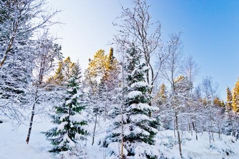 Bosque nevado que parece sacado de un cuento de Navidad.