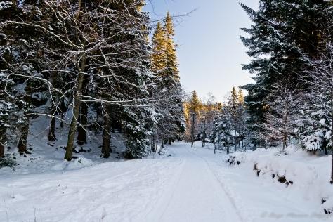 Camino, en el Fløyen, totalmente nevado.