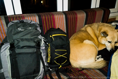 Kima y las mochilas listas para el viaje.